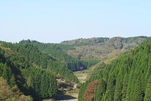 内地産のムクの檜は構造材に適した材木!